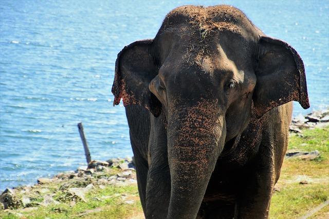 Udawalawe Elephant National Park forests for People Thanamalwila Sri Lanka
