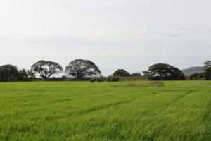 Forests for People Thanamalwila Sri Lanka.